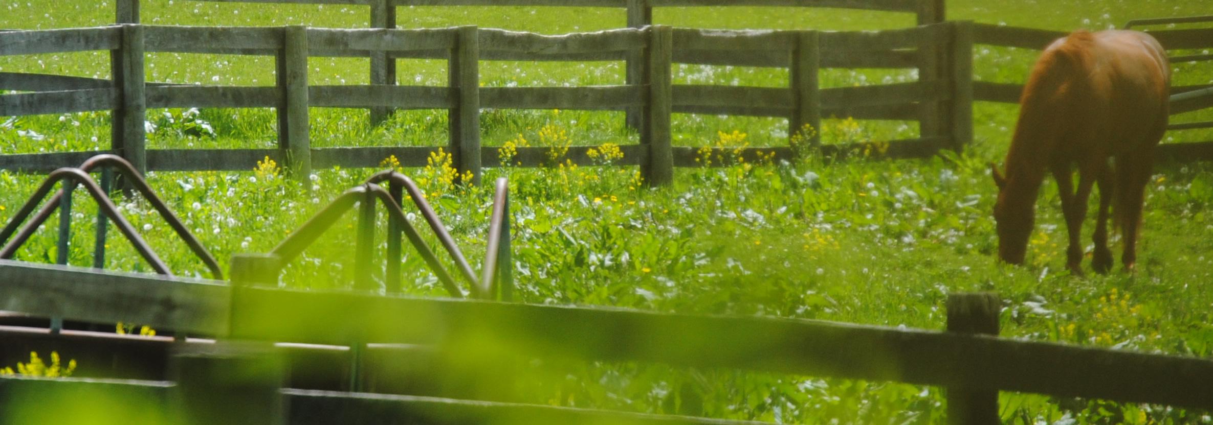 Michigan oakland county highland -  Highland Township Horse In Field Jpg